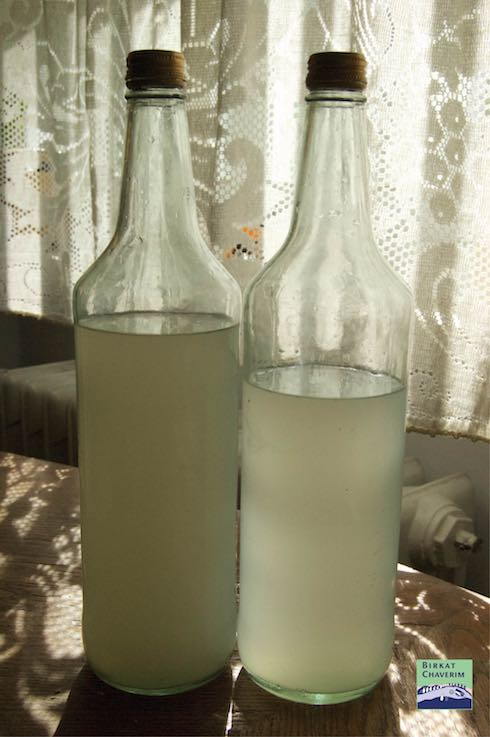Photo of Homemade gingerale made to use up yeast pre Passover via Birkat Chaverim