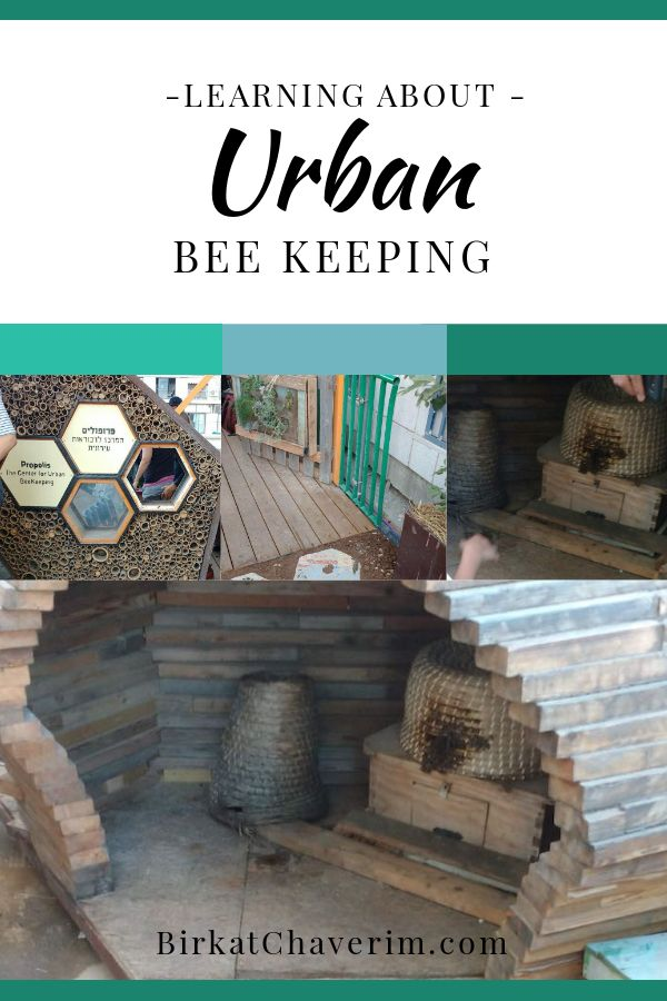 Learning about Urban Bee Keeping with images of hives