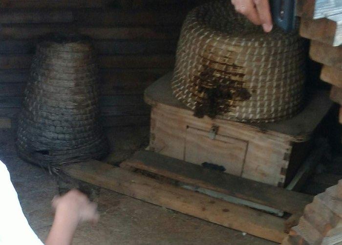 Closeup of Propolis hive
