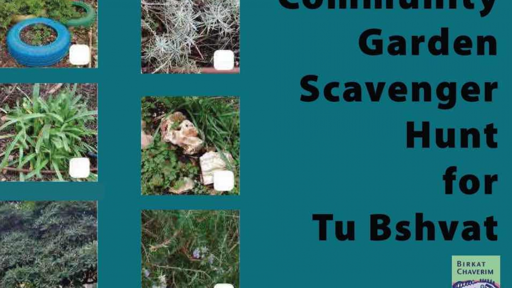 Featured image Community garden scavenger hunt for tu bshvat